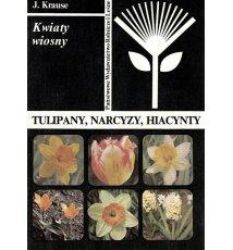 Tulipany, narcyzy, hiacynty