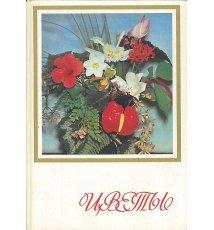 Kwiaty (w j. rosyjskim)